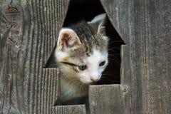 Bambino Kitty Cat Portrait Fotografia Stock Libera da Diritti
