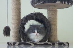 Bambino Kitty che si siede in caverna Fotografia Stock Libera da Diritti