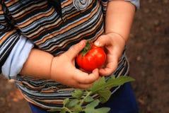 Bambino nel giardino Immagini Stock