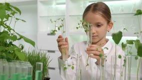 Bambino nel laboratorio di chimica, classe di Biologia crescente delle piante della piantina di scienza della scuola archivi video
