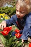 Bambino osservando i tulipani in giardino Fotografia Stock Libera da Diritti