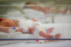 Bambino prematuro Immagine Stock
