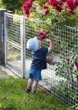 Bambino in roseto Fotografie Stock