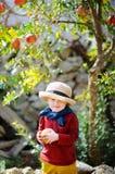 Bambino sveglio che seleziona melograno maturo nel giardino soleggiato dell'albero in Italia Immagini Stock Libere da Diritti