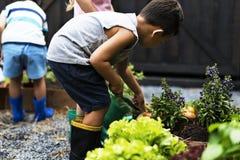 Bambino in un'esperienza ed in un'idea del giardino fotografia stock