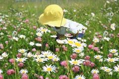 Bambino in un giacimento di fiore delle margherite e del trifoglio fotografia stock