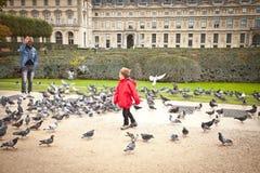 Bambino in un rivestimento rosso che va in giro fra le moltitudini di piccioni Fotografia Stock