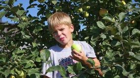 Bambino vicino di melo che mangia Apple stock footage