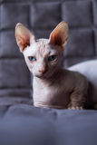 Bambinokat Royalty-vrije Stock Foto's