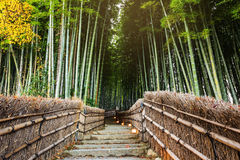 Bambo grove, Arashiyama Royalty Free Stock Photo
