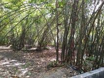 Bambo trädgård royaltyfri fotografi