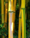 Bamboe 02 Stock Afbeeldingen
