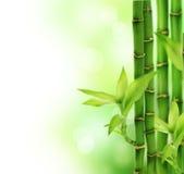 Bamboe Royalty-vrije Stock Foto's
