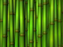 Bamboe stock illustratie