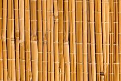 Bamboe Stock Afbeelding