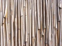 Bamboe Royalty-vrije Stock Fotografie