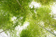 Bamboe stock foto's