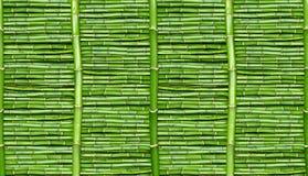 Bamboe - behang Stock Afbeeldingen