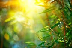 Bamboe bos het Groeien bamboe over vage zonnige achtergrond Royalty-vrije Stock Afbeeldingen