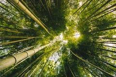 Bamboe bosarashiyama dichtbij Kyoto, Japan Royalty-vrije Stock Afbeeldingen