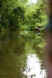 Bamboe boschina Stock Fotografie