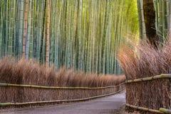 Bamboe bosweg in Japan Stock Afbeeldingen