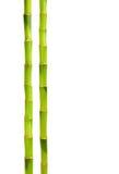 Bamboe dat op wit wordt geïsoleerdt Stock Afbeelding