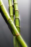 Bamboe dat in water wordt ondergedompeld Stock Afbeelding