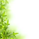 Bamboe en groene bladeren, achtergrond Royalty-vrije Stock Foto