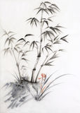 Bamboe en orchidee Stock Afbeeldingen