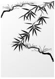 Bamboe en pijnboom Royalty-vrije Stock Afbeeldingen