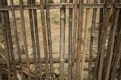 Bamboe in gescheiden rij Royalty-vrije Stock Afbeeldingen