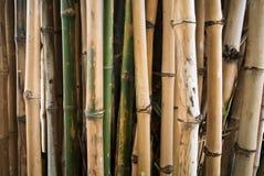 Bamboe groene bosachtergrond Stock Foto