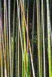 Bamboe in het bos Stock Foto