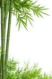 Bamboe met bladeren Royalty-vrije Stock Afbeelding