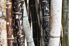 Bamboe met gravures royalty-vrije stock foto