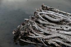 Bamboe op de Oever van het meer Stock Foto