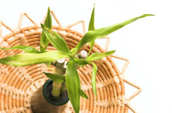 Bamboe op een natuurlijk dienblad Stock Afbeeldingen