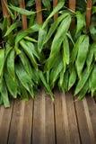 Bamboe op een terras stock afbeeldingen