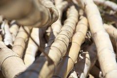 Bamboe op het strand Stock Afbeeldingen