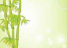 Bamboe op lichtgroene achtergrond Royalty-vrije Stock Foto
