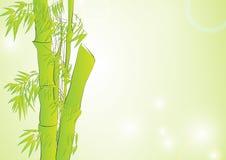 Bamboe op lichtgroene achtergrond Stock Afbeeldingen