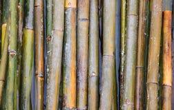 Bamboe op water Stock Afbeelding