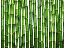 Bamboe op wit Royalty-vrije Stock Afbeeldingen
