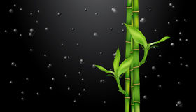 Bamboe op zwarte dalingen op zwarte vector illustratie