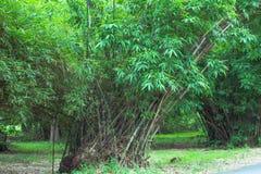 Bamboe in Phutthamonthon bij de Provincie van Nakhon Pathom, Thailand Stock Afbeelding