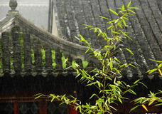 bamboe in regen Stock Fotografie