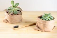 Bamboe toothbrushand succulente installatie royalty-vrije stock afbeeldingen