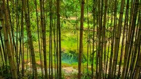 Bamboe in tuin in Morinj, Kotor-Baai, Montenegro royalty-vrije stock fotografie