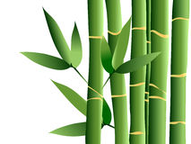 Bamboe, vector royalty-vrije illustratie